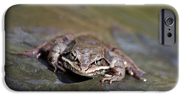 IPhone 6 Case featuring the photograph Wood Frog Close Up by Christina Rollo
