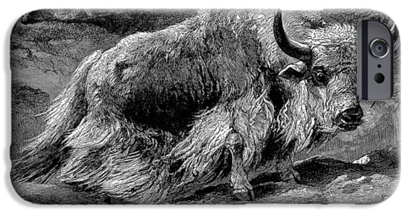 Yak iPhone Cases - Yak iPhone Case by Granger