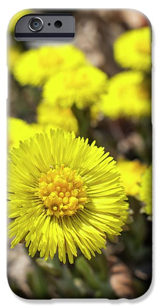 IPhone 6 Case featuring the photograph Yellow Coltsfoot Flowers by Christina Rollo