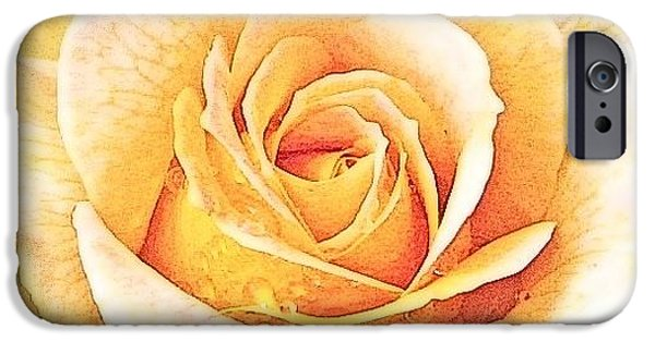 IPhone 6 Case featuring the photograph Yellow Rose by Karen Shackles