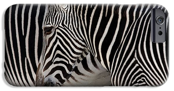 Fauna iPhone Cases - Zebra Head iPhone Case by Carlos Caetano