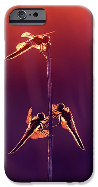 Iphone Dragonfly Red