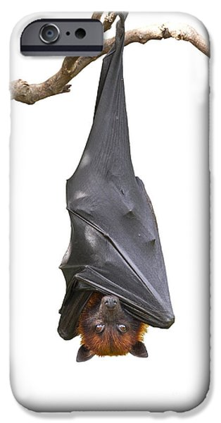 Bat iPhone 6 Case - Bat,lyles Flying Fox Pteropus by Worraket
