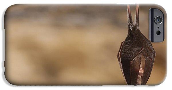 Bat iPhone 6 Case - Close Up Small Sleeping Horseshoe Bat by Martin Janca