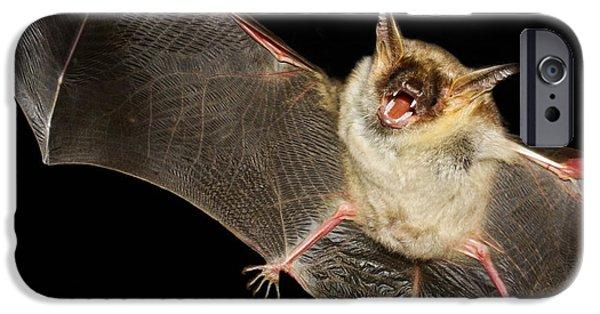 Bat iPhone 6 Case - Greater Mouse-eared Bat,  Myotis Myoti by Geza Farkas