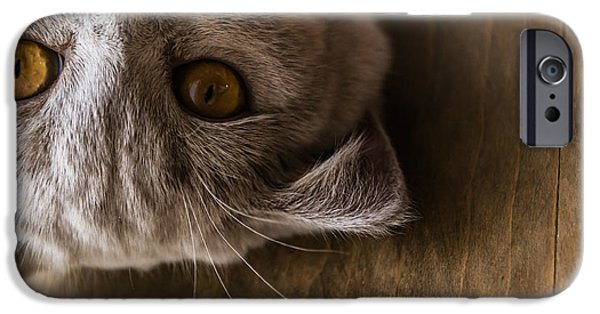 Brown iPhone 6 Case - Interests Of The British Cat by Ekaterina Sopelnik