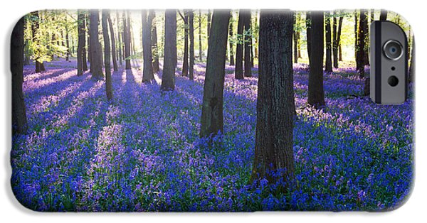 Early iPhone 6 Case - Purple Bluebell Woods In Early Morning by Stocker1970