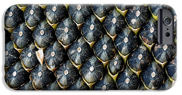 Sunflower Seeds iPhone 6 Case - Ripe Seeds In Sunflower. Extreme Close by Vadym Lavra