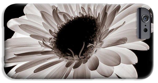 Sunflower Seeds iPhone 6 Case - Sunburst by Dave Bowman