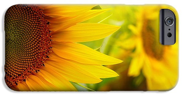 Sunflower Seeds iPhone 6 Case - Sunflowers by Sj Travel Photo And Video