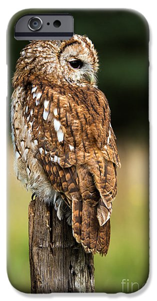 Brown iPhone 6 Case - Tawny Owl On Fence Post Against A Dark by Davemhuntphotography