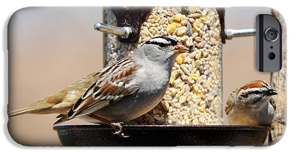 Sunflower Seeds iPhone 6 Case - White-crowned Sparrow, Zonotrichia by Sylvie Bouchard