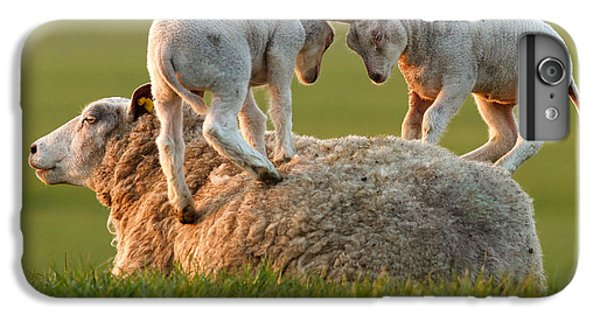 Leap Sheeping Lambs IPhone 6 Plus Case by Roeselien Raimond
