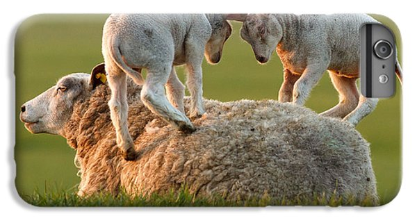 Sheep iPhone 6 Plus Case -  Leap Sheeping Lambs by Roeselien Raimond