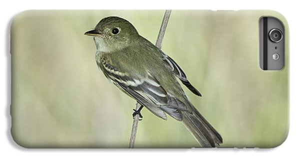 Acadian Flycatcher IPhone 6 Plus Case by Anthony Mercieca