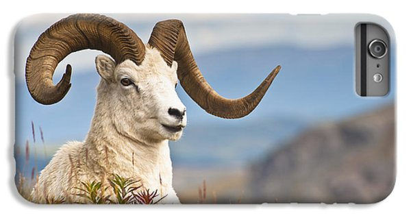 Adult Dall Sheep Ram Resting IPhone 6 Plus Case by Michael Jones