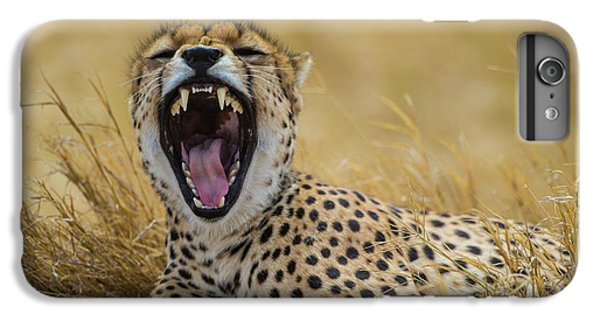 Africa Tanzania Cheetah (acinonyx IPhone 6 Plus Case