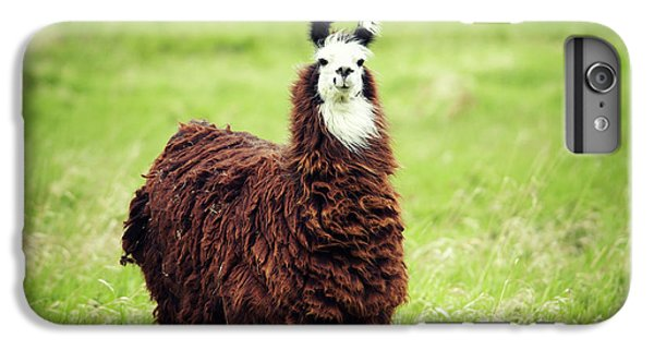 Llama iPhone 6 Plus Case - An Alpaca Vicugna Pacos Poses by Todd Korol
