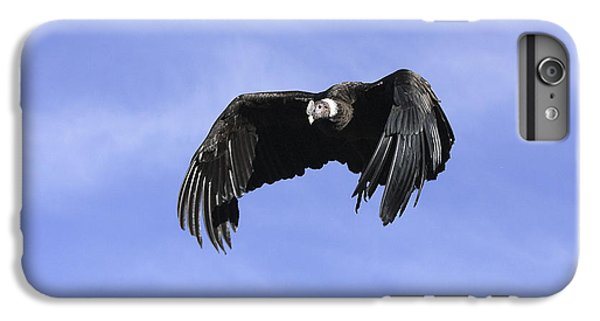 Andean Condor IPhone 6 Plus Case