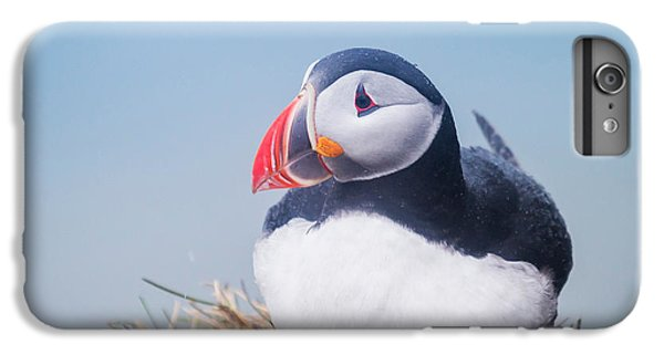 Atlantic Puffin Fratercula Arctica IPhone 6 Plus Case by Panoramic Images