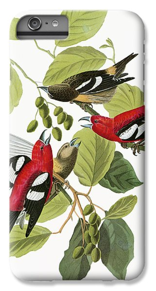Audubon Crossbill IPhone 6 Plus Case by Granger