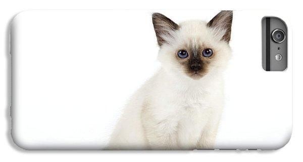 Birman iPhone 6 Plus Case - Birman Kitten by Jean-Michel Labat