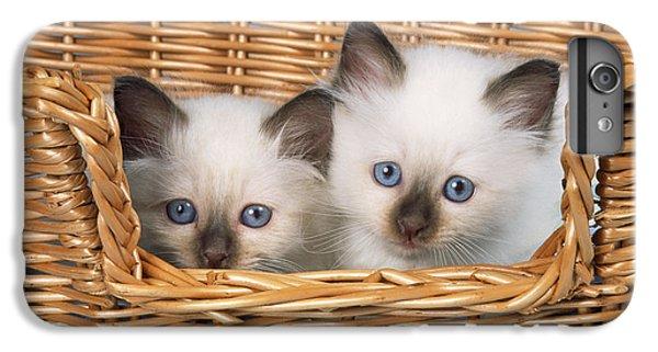 Birman iPhone 6 Plus Case - Birman Kittens by John Daniels