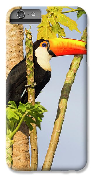 Brazil, Mato Grosso, The Pantanal, Toco IPhone 6 Plus Case