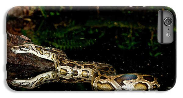 Burmese Python, Python Molurus IPhone 6 Plus Case