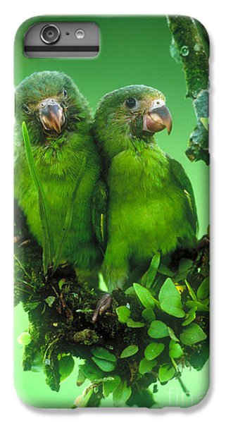 Cobalt-winged Parakeets IPhone 6 Plus Case