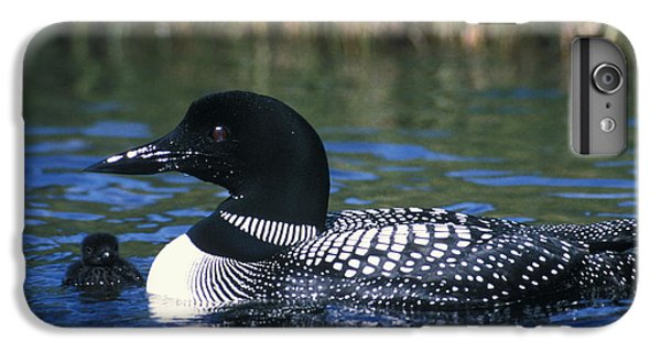Common Loon IPhone 6 Plus Case by Mark Newman