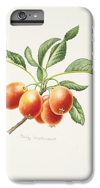 Crab Apples IPhone 6 Plus Case by Sally Crosthwaite
