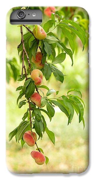 Donut Peaches IPhone 6 Plus Case by Iris Richardson