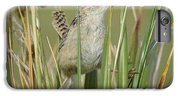 Grass Wren IPhone 6 Plus Case by John Shaw