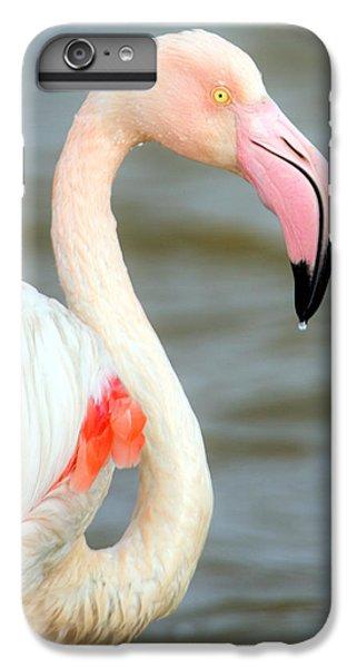 Greater Flamingo Phoenicopterus Roseus IPhone 6 Plus Case