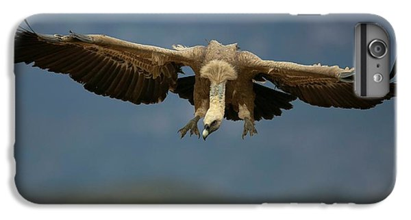 Griffon iPhone 6 Plus Case - Griffon Vulture Flying by Nicolas Reusens