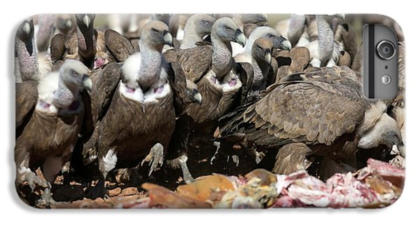 Griffon Vultures Feeding IPhone 6 Plus Case by Nicolas Reusens