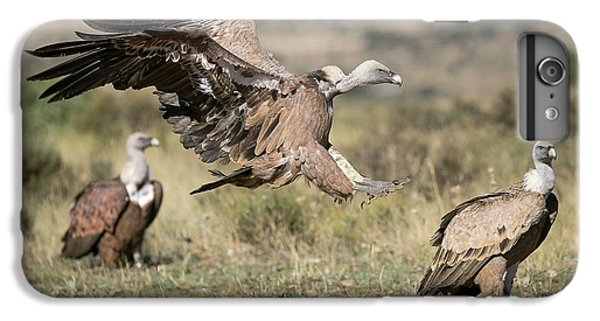 Griffon Vultures IPhone 6 Plus Case by Nicolas Reusens