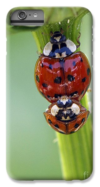 It Takes Two IPhone 6 Plus Case by Sharon Talson