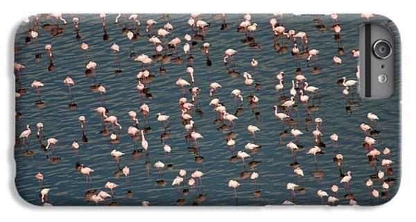 Lesser Flamingo, Lake Nakuru, Kenya IPhone 6 Plus Case