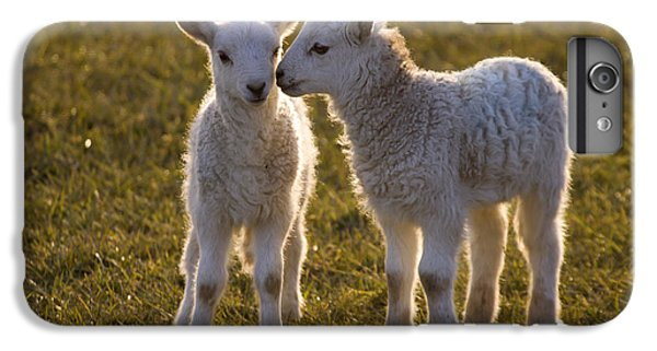 Sheep iPhone 6 Plus Case - Little Gossips by Angel Ciesniarska
