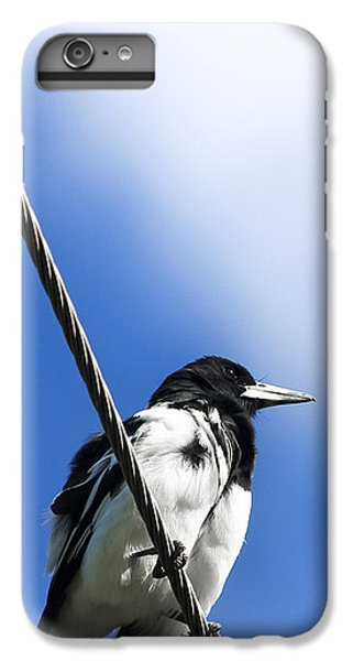 Magpie Up High IPhone 6 Plus Case by Jorgo Photography - Wall Art Gallery
