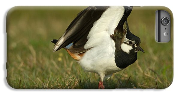 Lapwing iPhone 6 Plus Case - Northern Lapwing by Helmut Pieper