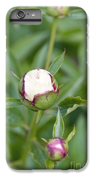 Paeonia Lactiflora Shirley Temple IPhone 6 Plus Case by Jon Stokes