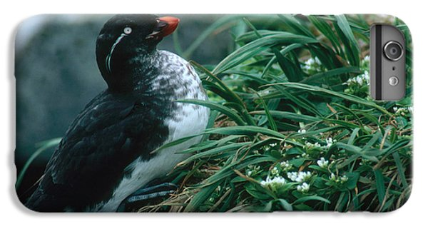 Auklets iPhone 6 Plus Case - Parakeet Auklet by Art Wolfe