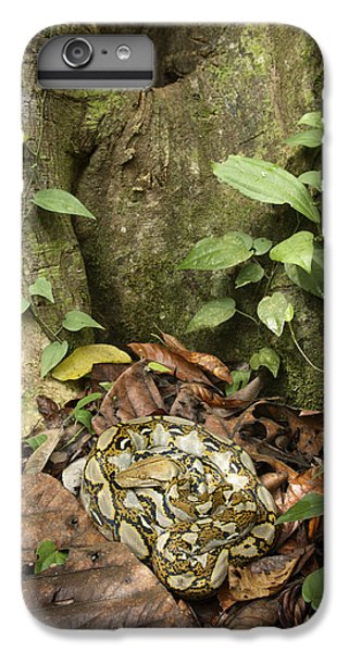 Reticulated Python IPhone 6 Plus Case