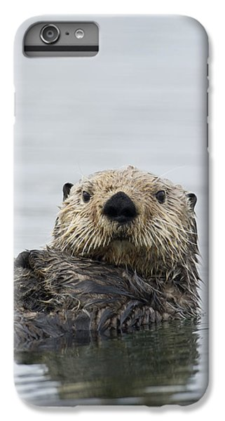 Sea Otter Alaska IPhone 6 Plus Case by Michael Quinton