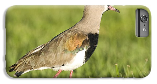 Lapwing iPhone 6 Plus Case - Southern Lapwing by William H. Mullins