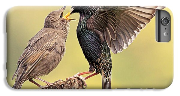 Starlings IPhone 6 Plus Case by Grant Glendinning