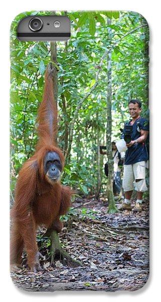 Sumatran Orangutan IPhone 6 Plus Case